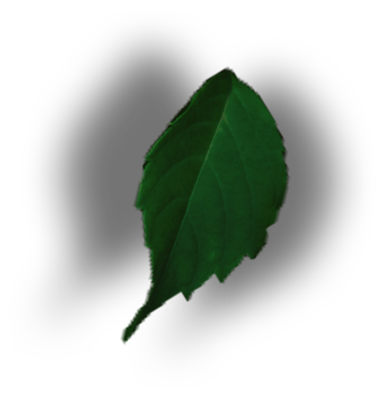 leaf png design